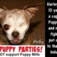 Harley Puppy Mill Survivor